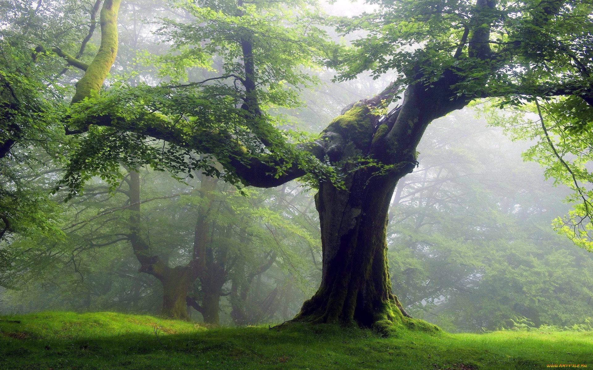 находиться картинки деревьев рабочего стола этот раз